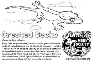 Crested Gecko Coloring Sheet